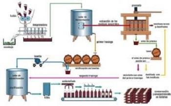 procesos_vino